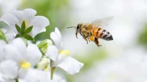 apiculture-materiel