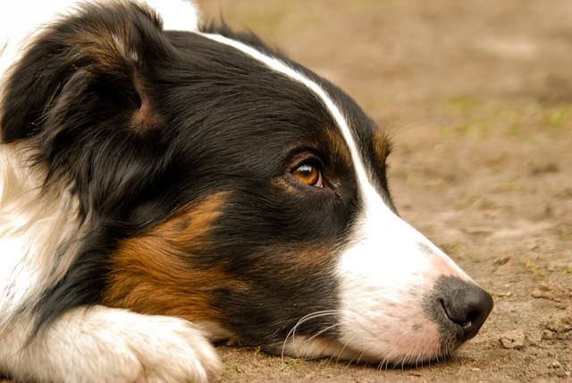 un chien de famille