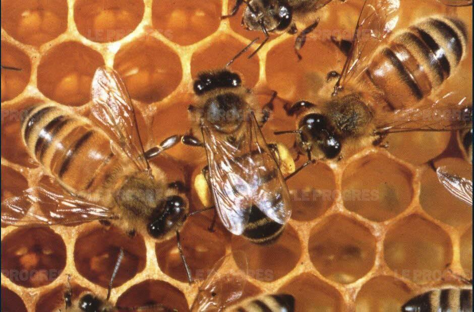 Comment est fabriqué le miel ?